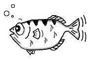 [image of Archer Fish]